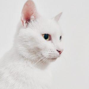 adorable-animal-animal-photography-1485968